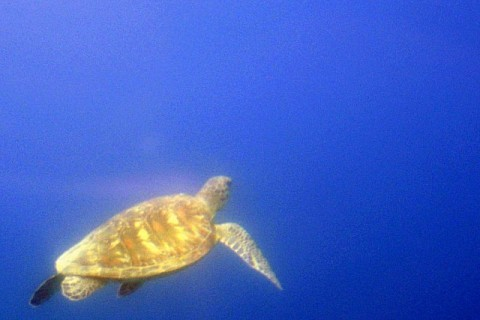 Plongée sous marine océan Indien